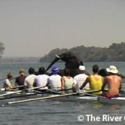 The Rowing Regatta-2