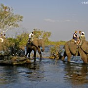 elephants - in the water 1
